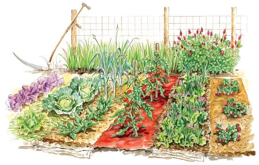 Bolsa de Bug Out Kit de semilla de súpervivencia Preppers suministros esenciales 25 paquete de semillas no modificados genéticamente