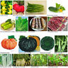 Heirloom Garden Vegetable Seed Various Non-GMO Seeds Bank Survival Organic Plant