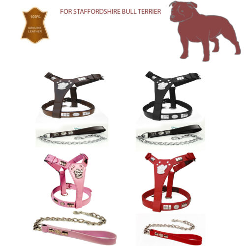 STAFFY STAFFORD SHIRE LEATHER DOG HARNESS /& LEAD SET  CHROME DOG FACE NEW
