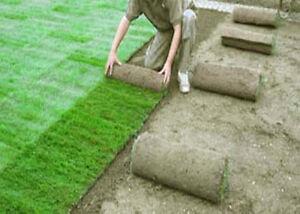 Rollrasen-Fertigrasen-Tagesfrisch-vom-Feld-geschaelt-auch-mit-Profi-Verlegung