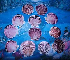 "TWELVE (12)  3""  PURPLE PECTEN SINGLES  SEA SHELLS BEACH  DECOR CRAFT"