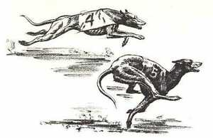 RACING-GREYHOUND-1964-Dog-Art-Print-MATTED