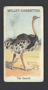 WILLS-ANIMALS-amp-BIRDS-THE-OSTRICH