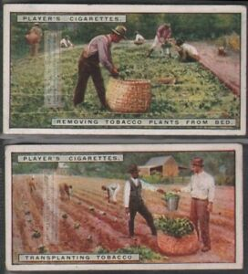 Transplanting-Tobacco-Seedling-To-The-Field-Two-90-Y-O-Trade-Ad-Cards