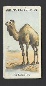 WILLS-ANIMALS-amp-BIRDS-THE-DROMEDARY
