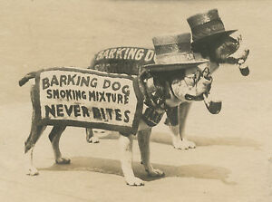 ANTIQUE-BOARDWALK-TOBACCO-LEAF-ADVERTISING-AMERICAN-PITBULL-PIPE-HAT-OLD-PHOTO
