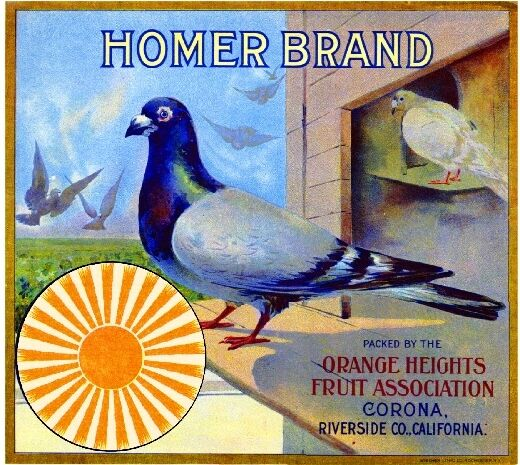 Corona Homer #1 Pigeon Orange Citrus Fruit Crate Label Art Print
