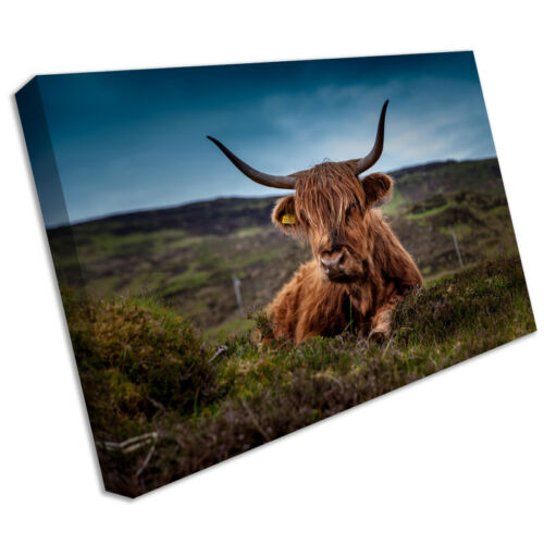 Cow animal canvas print framed photo picture wall artwork anim157