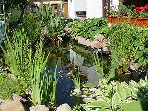 Grosse Pflanztasche Mit 8 Taschen Pflanzkorb Gartenteich Bewuchsmatte