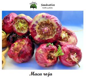 Lepidium Meyenii Maca Yellow Andean Maca 100 Seeds Bio