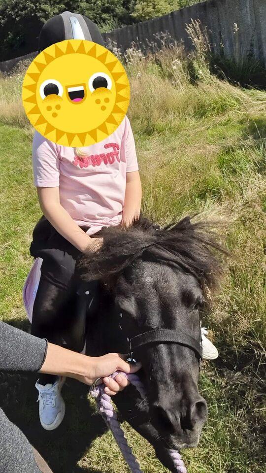 Shetlandspony, hoppe, 7 år
