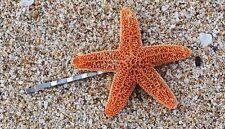 Starfish Mermaid Hair Bobby Pin - Bridal Accessories, Mermaid Hair Accessories