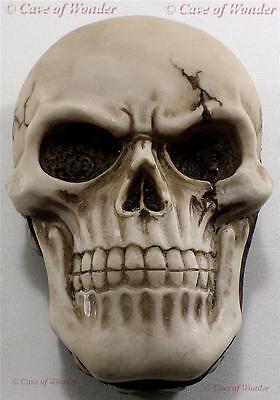 NEMESIS NOW WAITING BEYOND SKULL TRINKET BOX Gothic/Occult/Fantasy/Horror/Legend