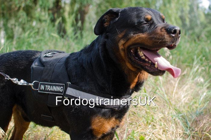 rossotweiler CABLAGGIO Regno Unito, con impugnatura e patch   Riflettente Dog Harness NO PULL