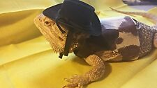 Lil' Bestie Bearded Dragon reptile Harness and Leash COWBOY