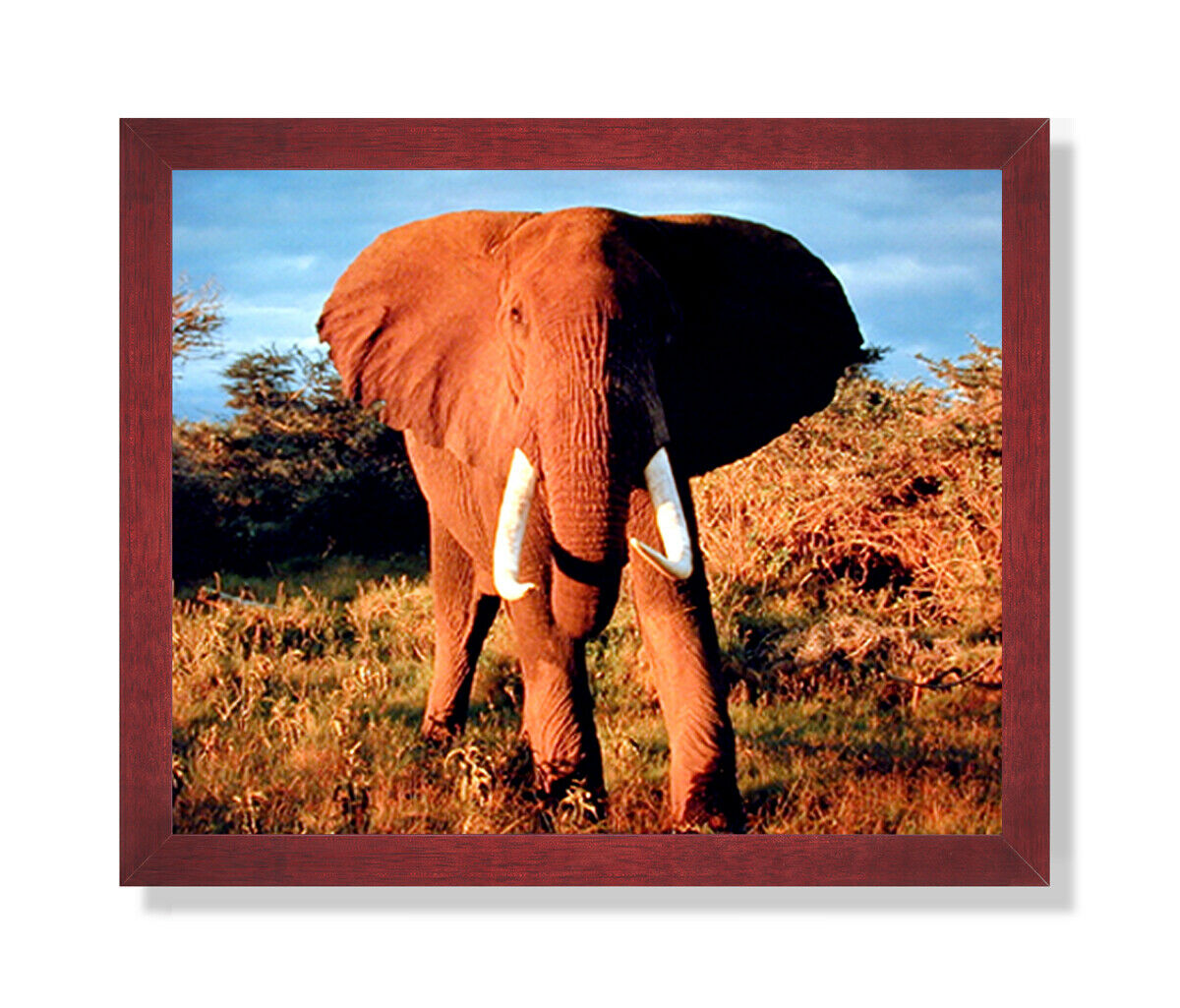 African Elephant Kids Room Animal Wildlife Wall Picture Cherry Framed Art Print