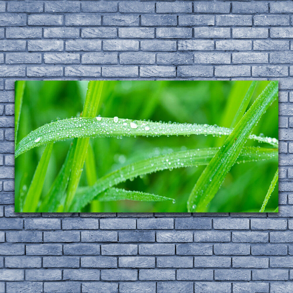 Print on Glass Wall art 140x70 140x70 140x70 Picture Image Grass Nature ff874e