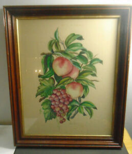VINTAGE-FRAMED-CHARLES-ADAMS-FRUIT-PRINT-26-034-X-21-5-034