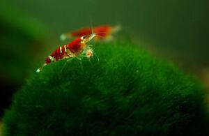 Pet Supplies Fish & Aquariums Xmas Moss-aquarium Fish Tank 55 75 90 100 125 Gallon A1