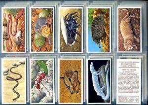 Brooke-Bond-Tea-Card-Set-INCREDIBLE-CREATURES-Animals-Sheen-Lane