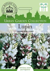 Thompson & MORGAN-Fleurs Jardin Urbain-Lupin nain fée rose - 40 graines  </span>