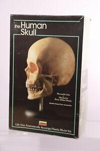 Lindberg 1//1 Full Size Human Brain Skull Combination Anatomy Kit