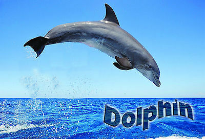 Kids Children PostersWildlife Portrait Art Print #30 Dolphin A3 size