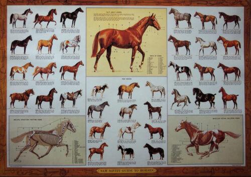 SAM SAVITT/'S GUIDE TO HORSES POSTER 36 x 25