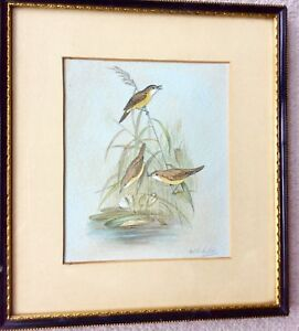 Vintage-Watercolour-Painting-Water-Birds-Signed-Walter-H-Austin-Royal-Worcester