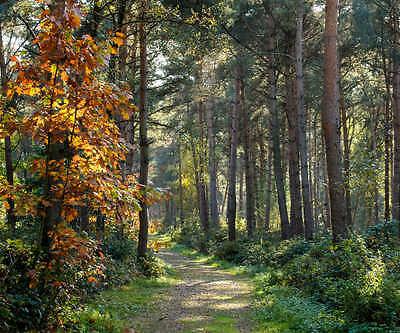 FOREST PATH LANDSCAPE POSTER PRINT STYLE J 30x36 HI RES 9MIL PAPER