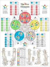 Large REFLEXOLOGY Foot Pressure Points Poster English-Vietnamese-Chinese-Spanish