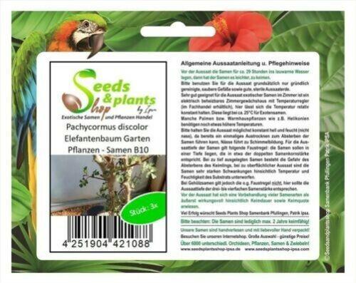 3x Pachycormus Discolor Elefantenbaum Jardin Plantes Graines B10