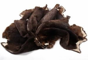 4990 castoro pellicce di di mietitrici pelli canadesi wwxRPq7T