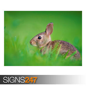 BABY-HARE-AE919-Photo-Picture-Poster-Print-Art-A0-A1-A2-A3-A4