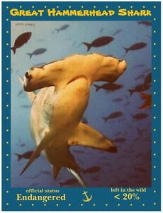 Great Hammerhead Shark, an Endangered Species by PostcardsTo SaveThePlanet.org