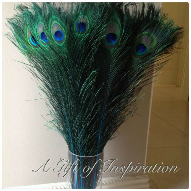 5 BLUE 55-60cm Peacock Eye Feathers DIY Art Craft Costume Millinery Vase Decor
