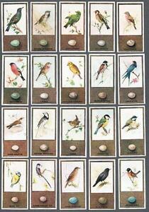 1936 Godfrey Phillips British Birds And Their Eggs Tobacco Cards Complete Set