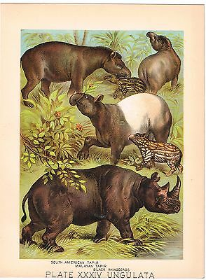 ANTIQUE PRINT VINTAGE 1800S CHROMOLITHOGRAPH ORIGINAL BLACK RHINO TAPIR