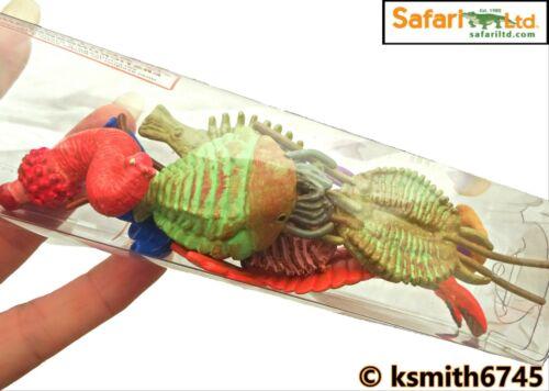 Safari CAMBRIAN LIFE TOOB toy wild prehistoric animal tube BUNDLE of 8 NEW