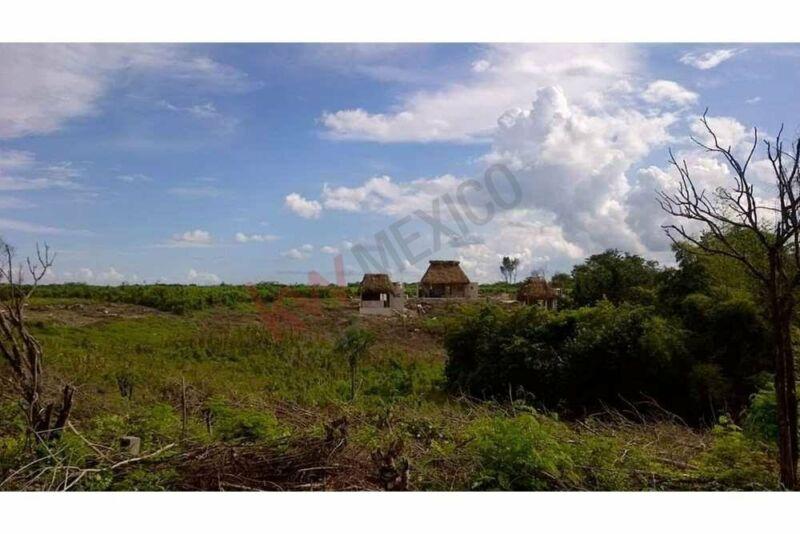La mejor oportunidad de adquirir lotes en venta con cenote privado en la propiedad, Mun...