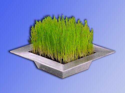 Véritable ziergras en métal deco coquille Culture complet set DECO herbe Coque