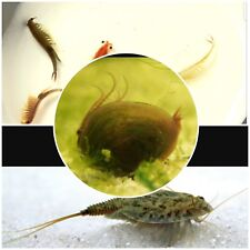Triops,Fairy shrimp and Clam shrimp! vernal pool kit! eggs! with food! Fish tank