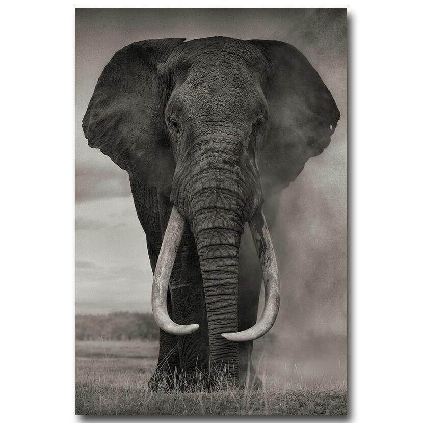 פוסטר פיל טבע שחור לבן