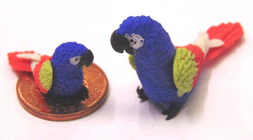 Escala 1:12 Grande Y Pequeño Azul LOROS Aves Exóticas Casa De Muñecas Accesorio P8