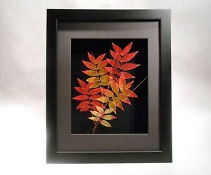 Leaf Lines 11x14 Etched Real Chinese Pistache Leaves in Black Shadowbox Frame