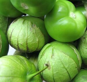 50-Tomatillo-Seeds-Monster-Green-Tomato-Seeds