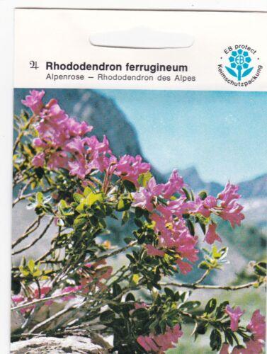 Rhododendron ferrugineum rostblättrige rostrote Alpenrose almrausch