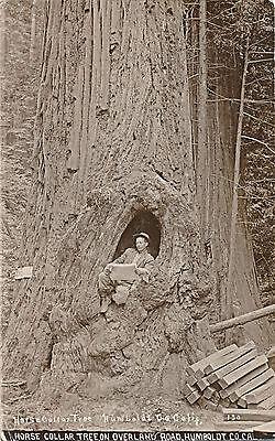 1920 RPPC Man in  Horse Collar Tree, Overland Road, Humboldt Co., Ca