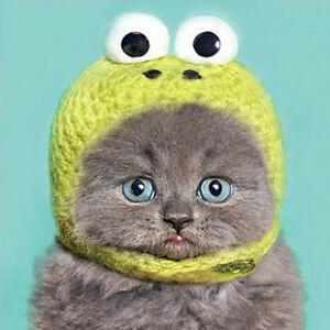 Funny Grey Kitten in Kermit Bonnet Birthday Card Cute Cat Greeting