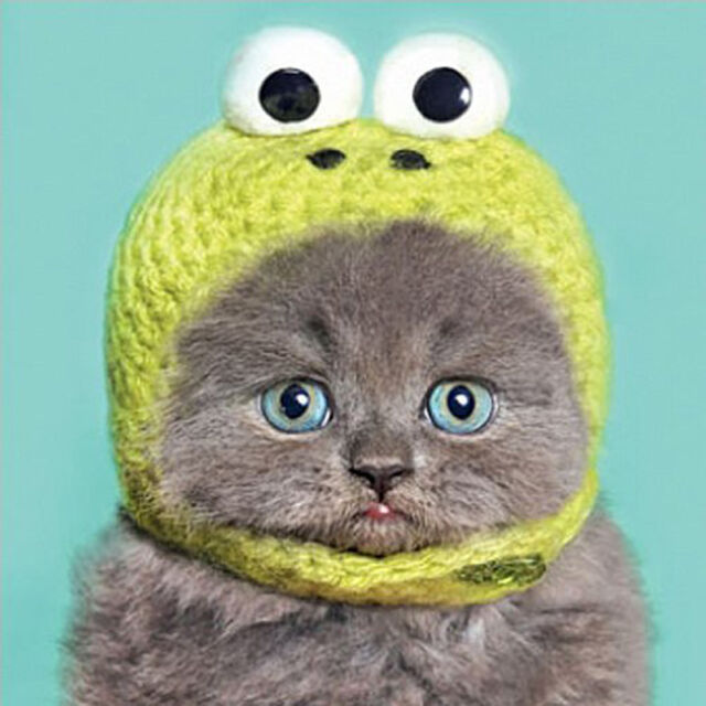 nouveau concept 94a13 64be3 Funny Humour Birthday Greeting Card Grey Cat Kitten in Kermit Hat Bonnet